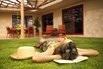 lawn_7_15_homespun
