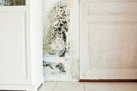 mold_in_home