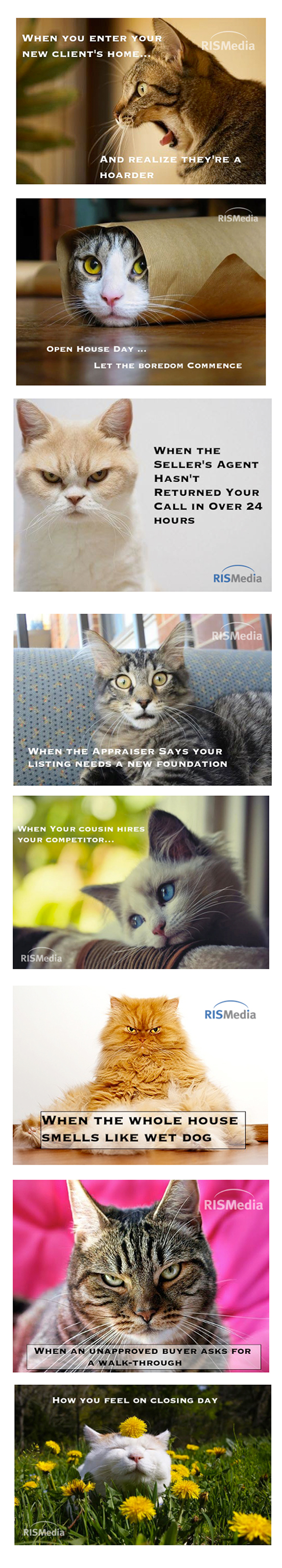 8 Real Estate Cat Memes to Live By | RISMedia's Housecall