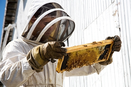 Beekeeper Looking at Hive