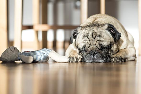 dog_happy_pet
