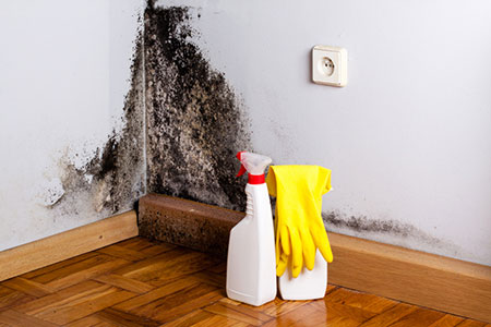 10 Things Smart Homeowners Should Know about Mold Dangers