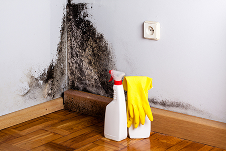 3 Ways to Keep Your Home Mold-Free