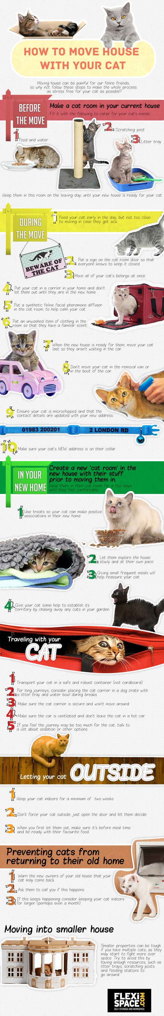cats_infographic