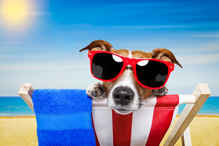 Keeping Your Dog Safe during Summer Months