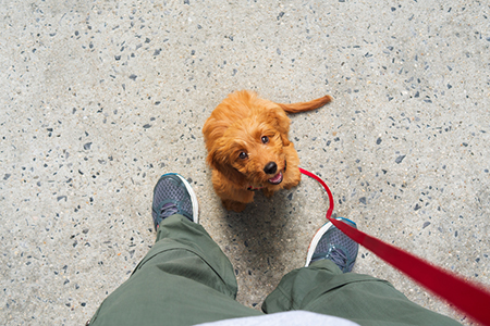 Report Says Dogs Can Really Understand What You Say