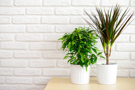 Green Your Space: 5 Tips for a Healthy Home