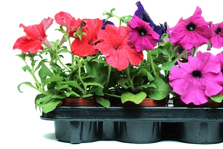 Get Busy Now and Make the Most of Annuals