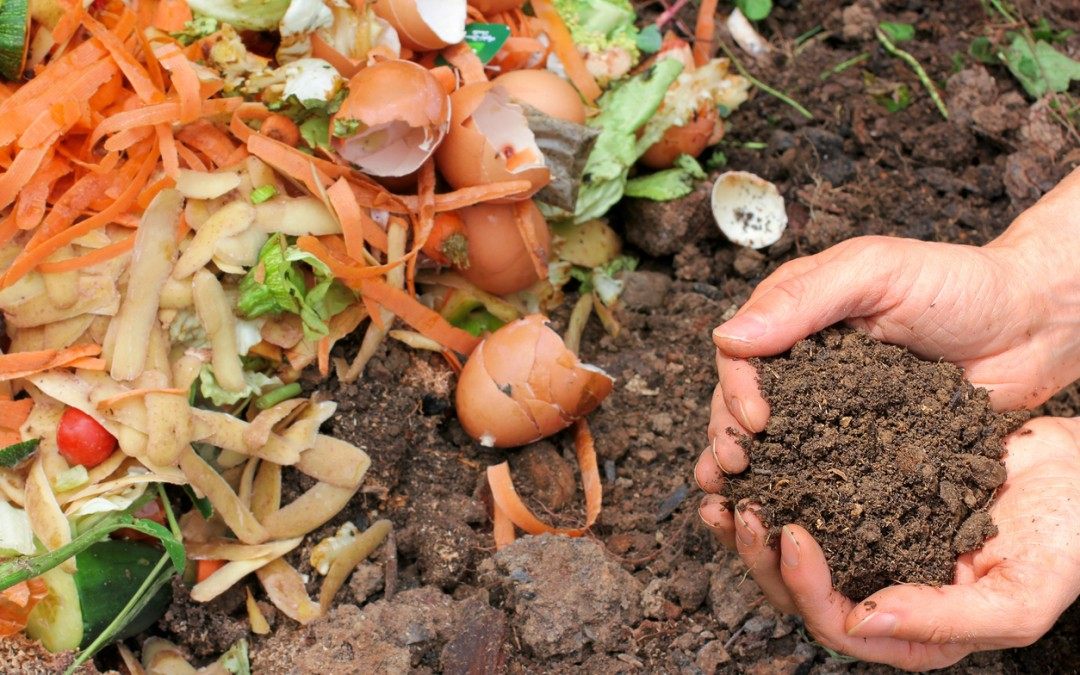 4 Reasons You Should Compost