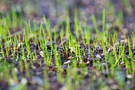 How to Plant a Lawn and Make It Last