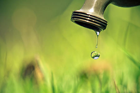 5 Practical Water Conservation Tips to Keep Your Garden Lean and Green