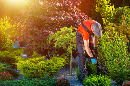4 Questions to Ask Your Landscaper Before They Dig In