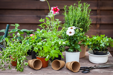 Gardening For Your Small Deck Or Patio