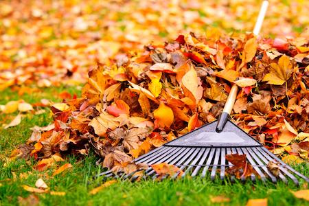 Fall into Leaf Maintenance