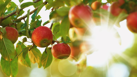 Fruit Tree Owner's Guide: Tips for a Happy Harvest!
