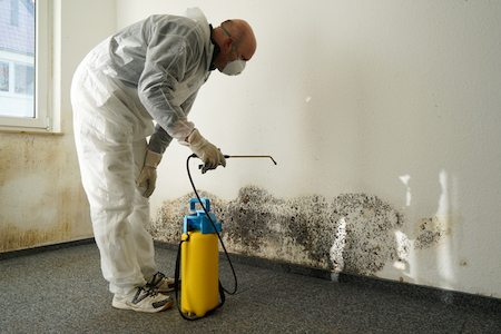 Removing Mold to Get Market Ready