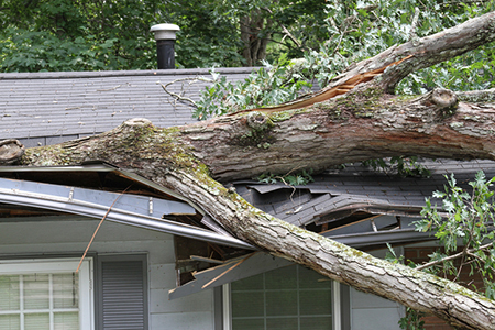 Real Estate Q&A: Can I Get My Neighbor to Pay for Her Tree's Damage to My House?