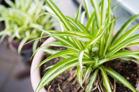 3 Houseplants Perfect for Entry-Level Gardeners