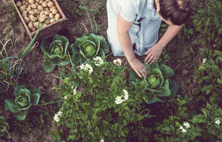 How to Tackle Your Garden This Year