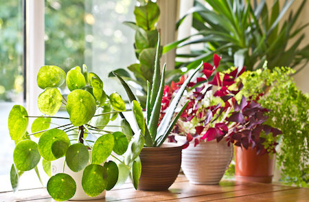 3 Beginner Houseplants to Freshen Up Your Space