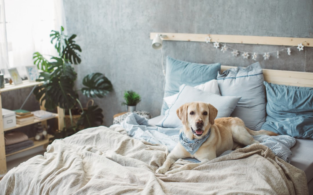 Clearing Out the Pet Smell in Your New Home