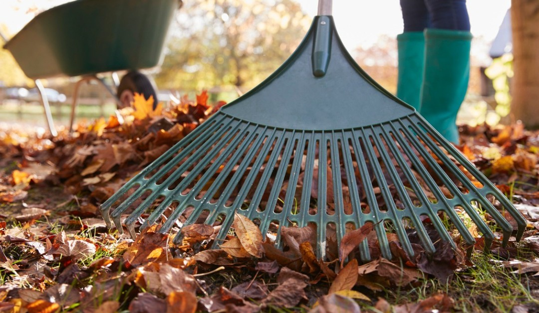 Rake Those Leaves for a Faster Sale