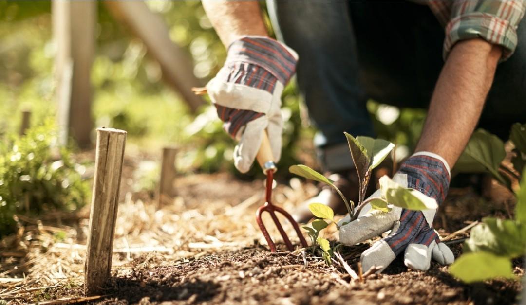 7 Simple Gardening Skills Anyone Can Master