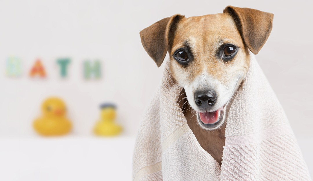 Solar Panels, Elevators, a Dog Shower? Here Are 12 Cutting-Edge Items for Your Next Home