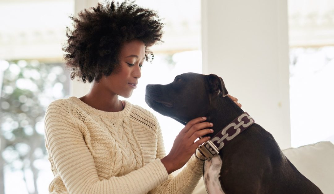 What Pet Owners Need to Consider When Buying a Home