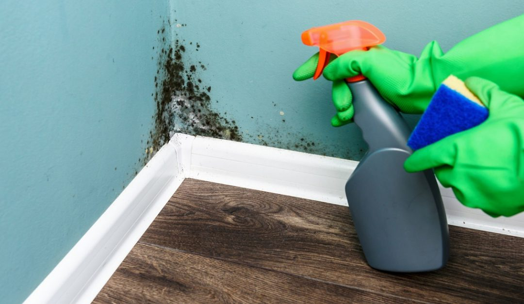 How to Prevent Mold in Your House