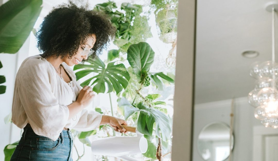 Concerned About Air Quality? Houseplants Might Help