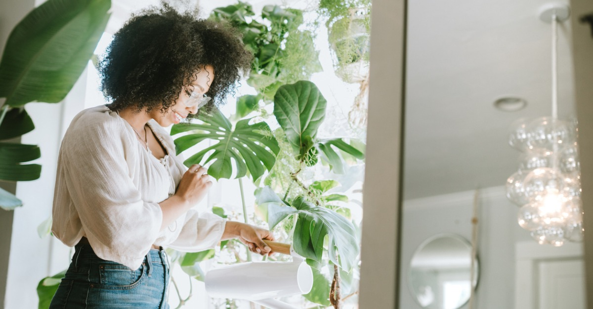Add Natural Appeal to Your Home with These Houseplants