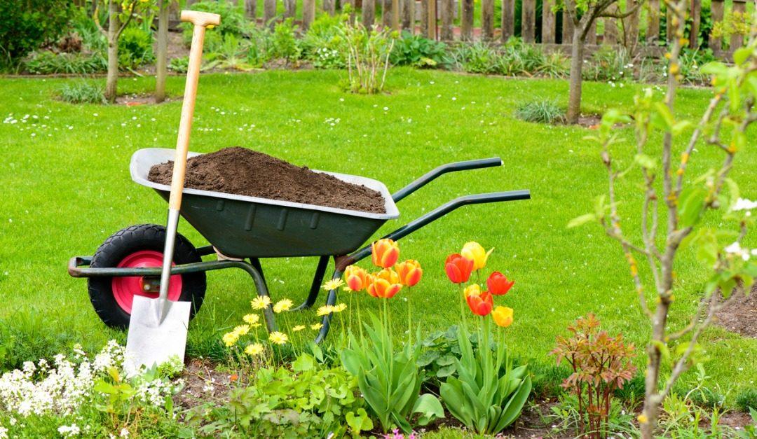 4 Affordable Landscaping Tips