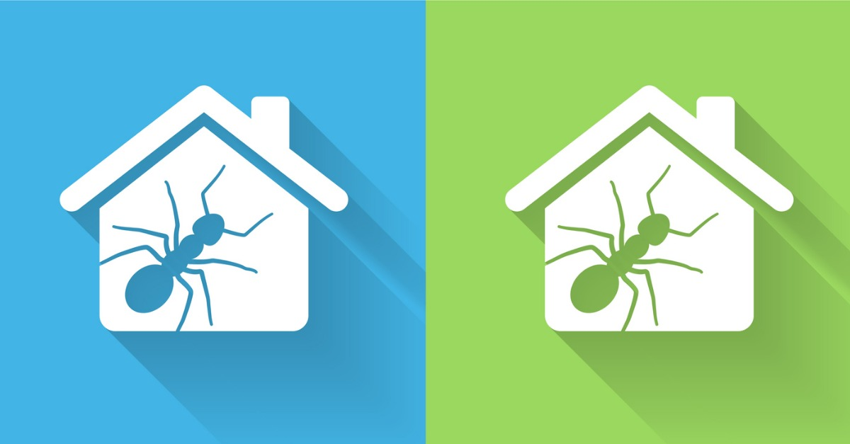 5 Tips to Keep Your Home Ant-Free