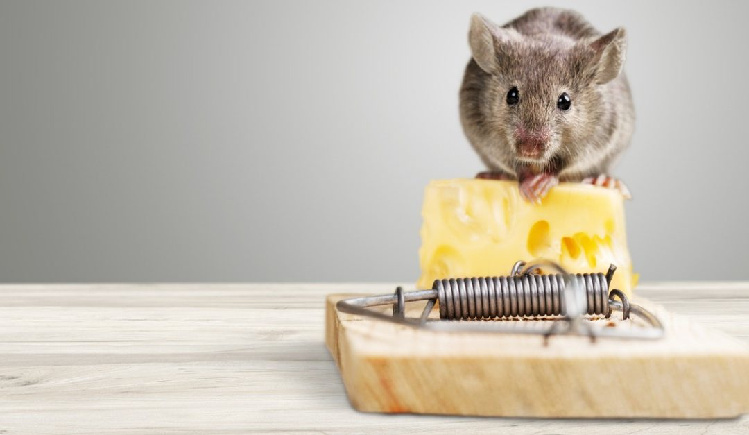10 Simple Steps to Keep Rodents Out