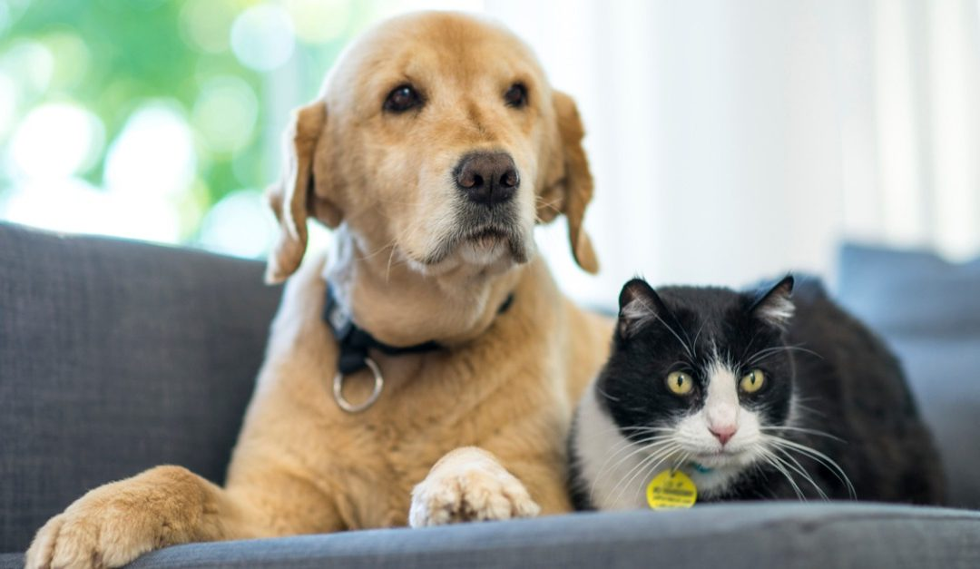 How to Avoid Turning Off Potential Homebuyers if You Have Pets