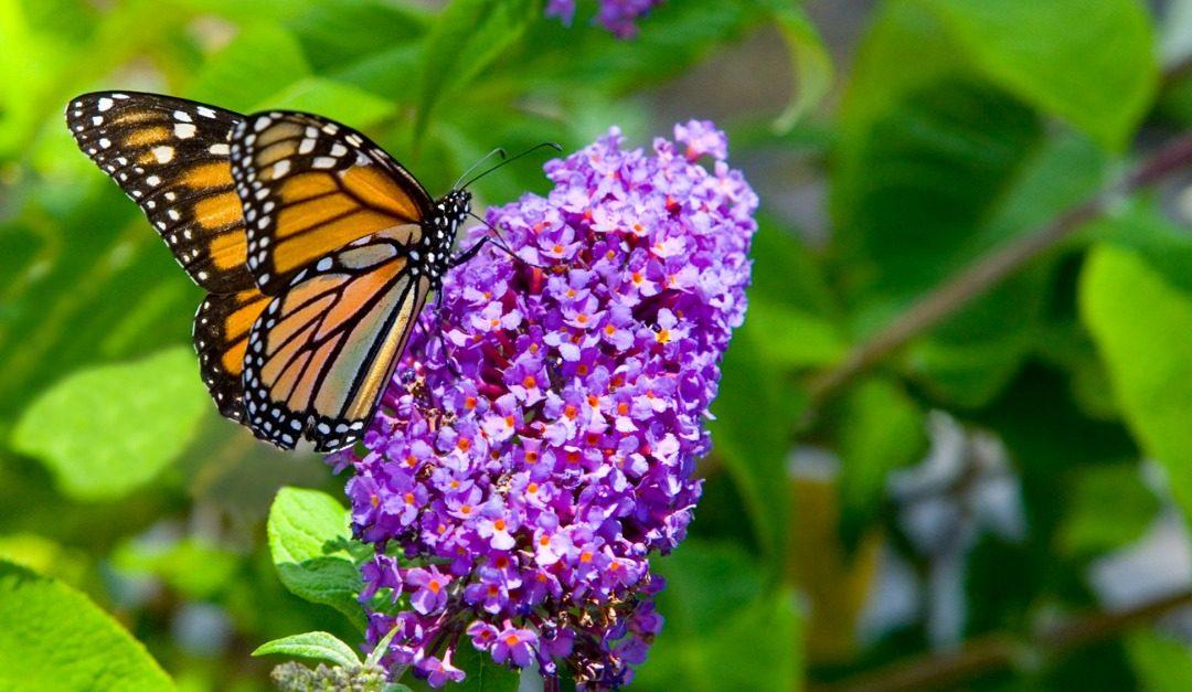 5 Shrubs to Beautify Your Garden