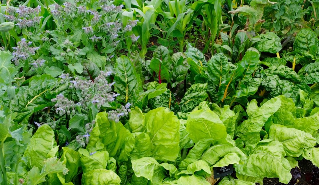 Concerned About Climate Change? Plant a Victory Garden