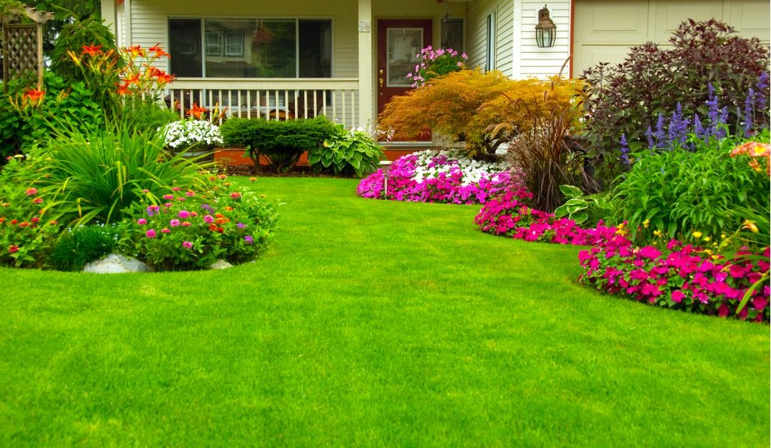 How to Keep Your Grass Healthy