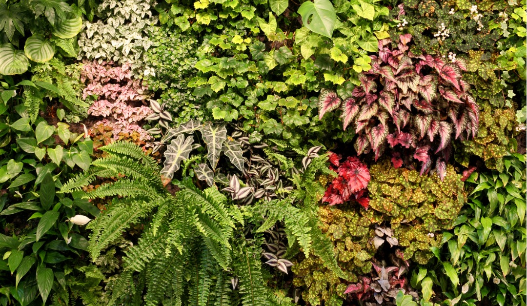 What You Need to Know About Indoor Vertical Gardens