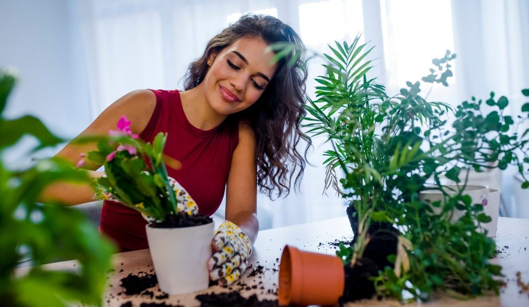 5 Tips for Keeping Healthy Houseplants