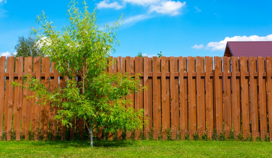Should You Fence in Your Yard?