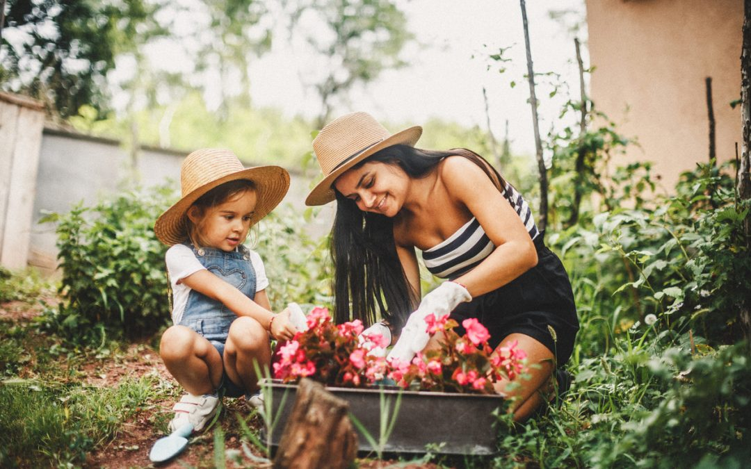 Budget-Friendly Gardening Tips for Beginners