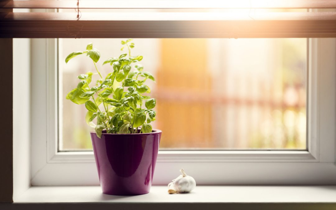 4 Herbs You Should Be Growing in Your Kitchen