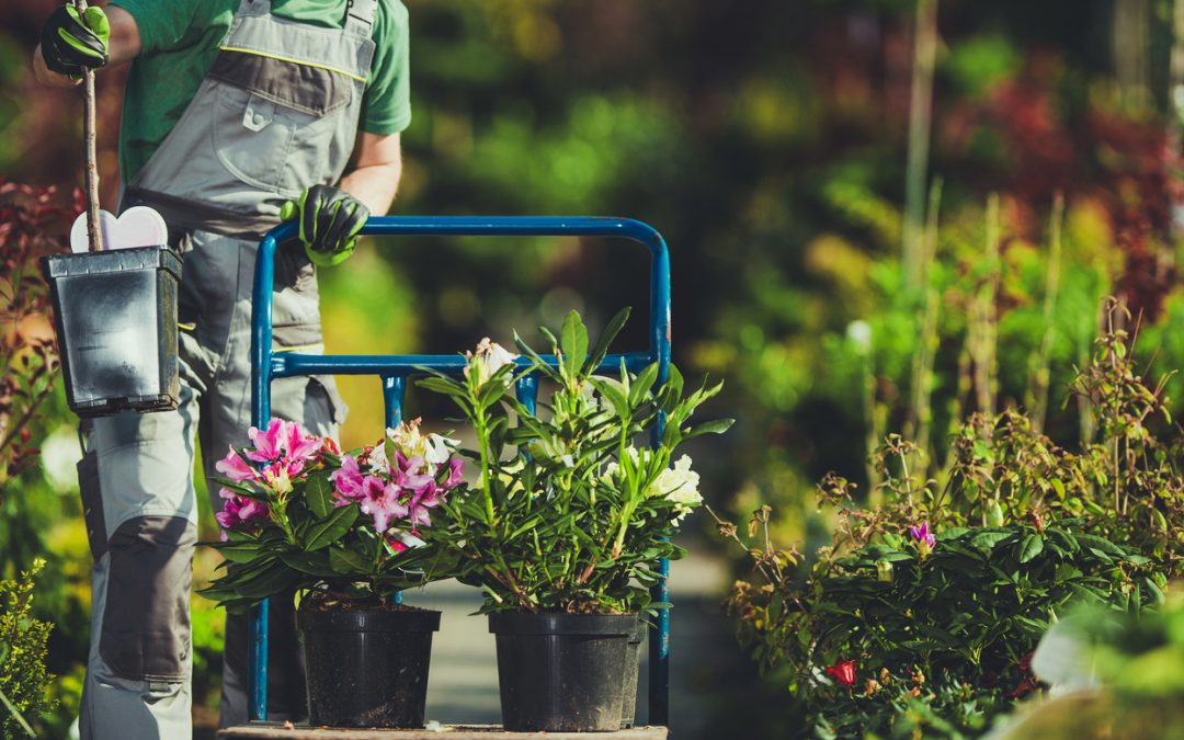 Landscaping Tips for Property Safety