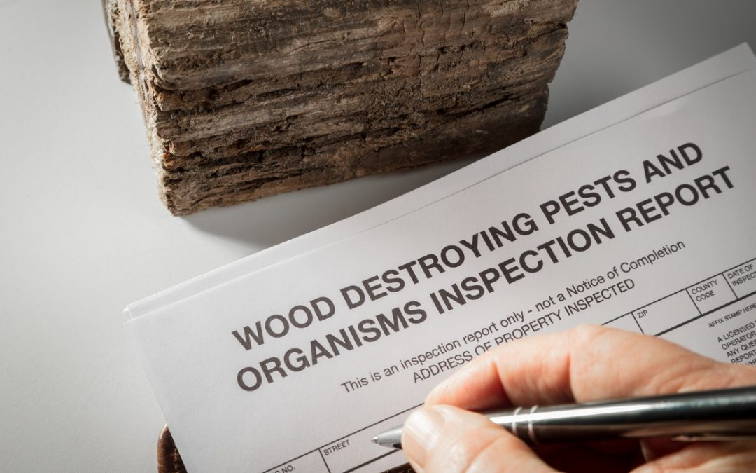 Pests Causing Property Damage? 4 Warning Signs to Look For
