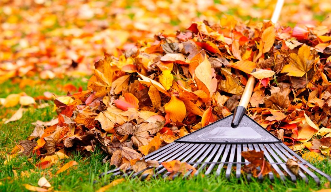Tips for Leaf Raking