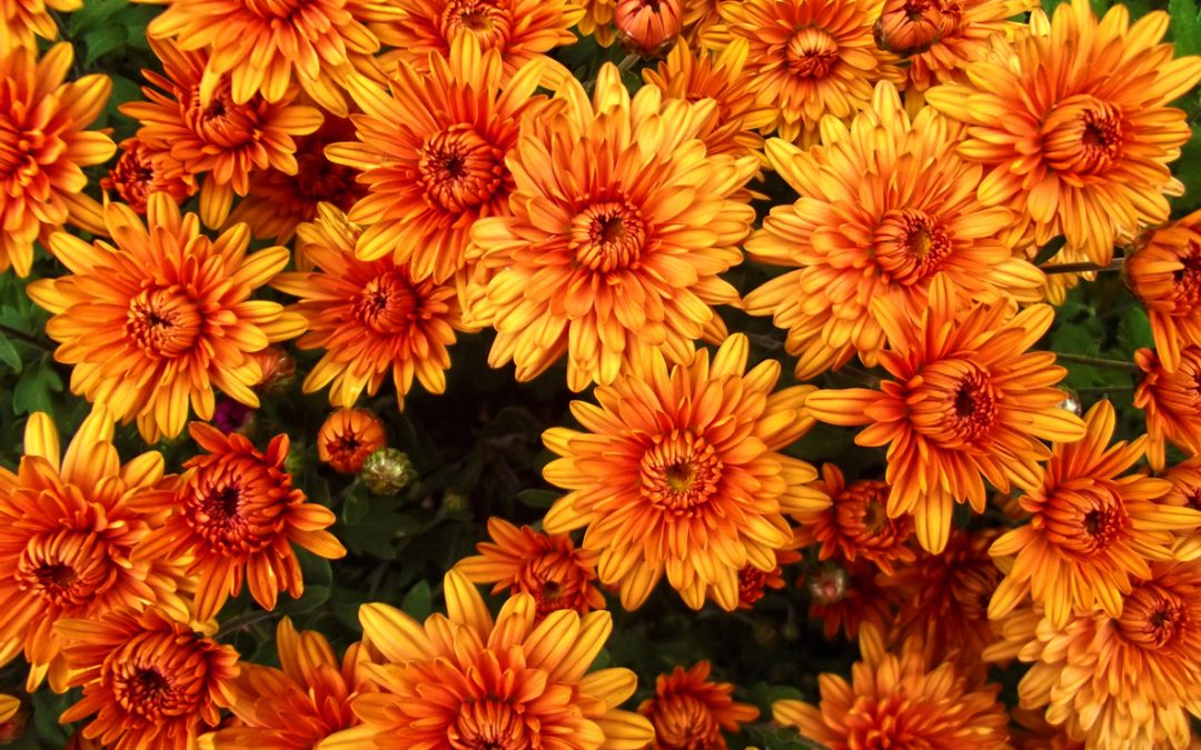 5 Plants Your Garden Needs This Fall