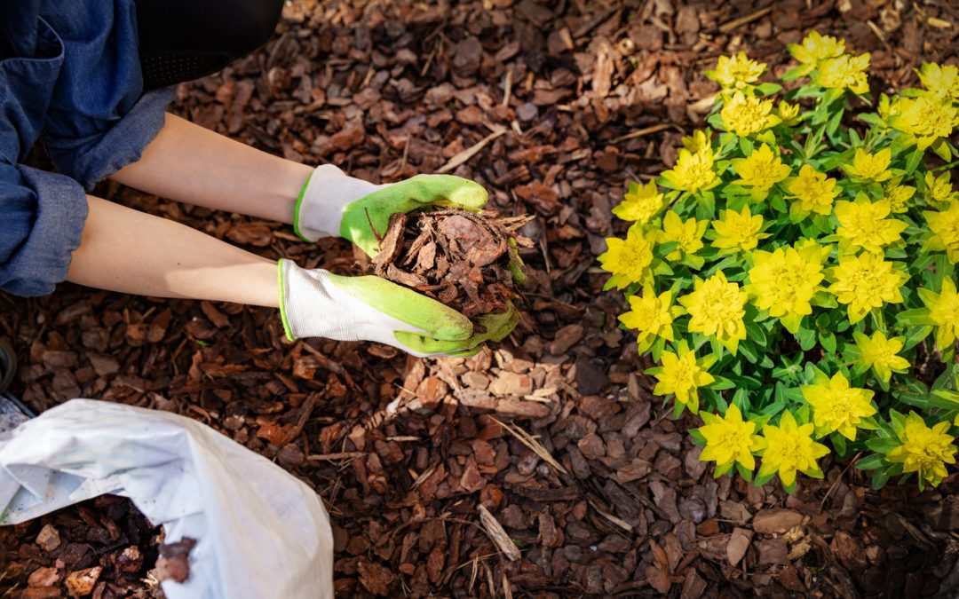 3 Tips for Low-Maintenance Landscaping