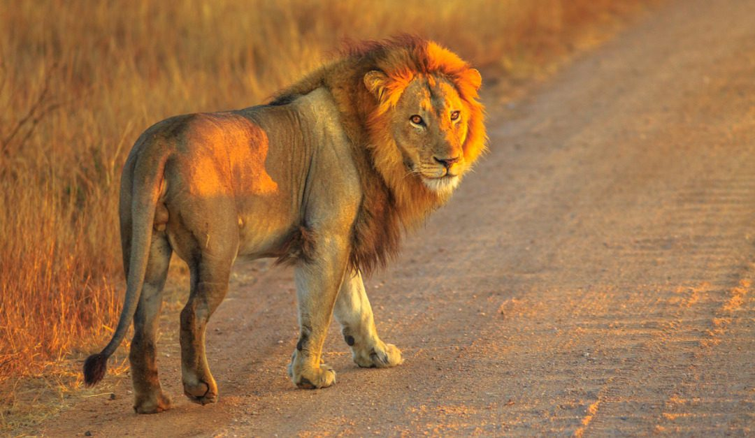 Why an African Safari May Be Your Trip of a Lifetime